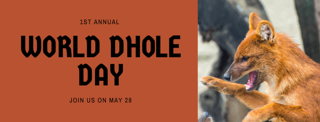 1st Annual World Dhole Day (May 28, 2021)
